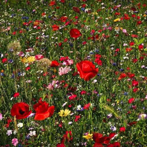 20210527_flower-meadow_512.jpg